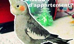 oiseau d'appartement