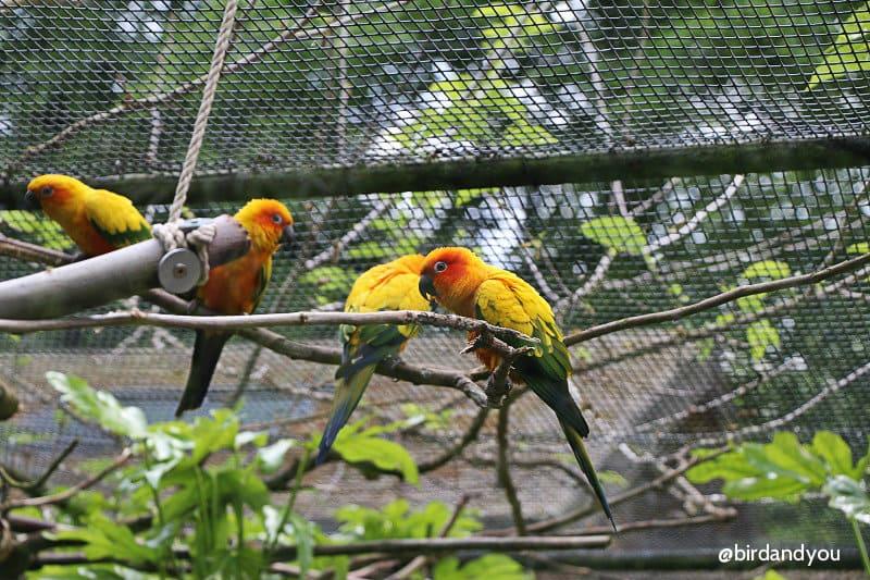 Conure soleil volières zoo de Lille
