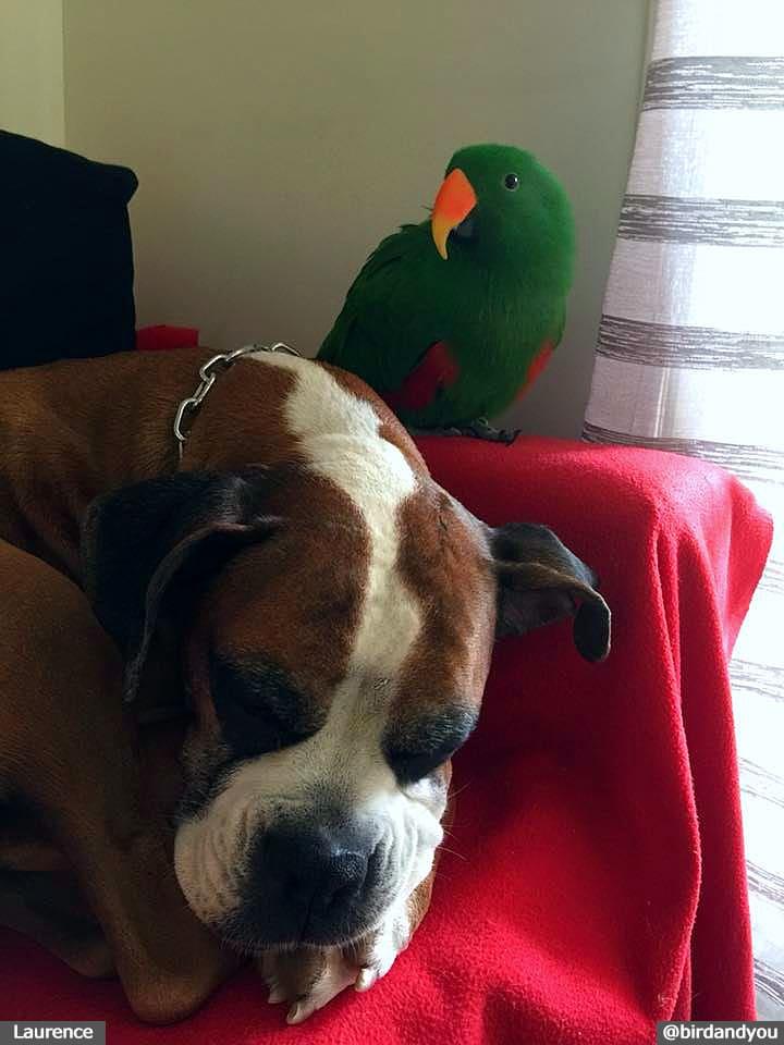 Perroquet et chien
