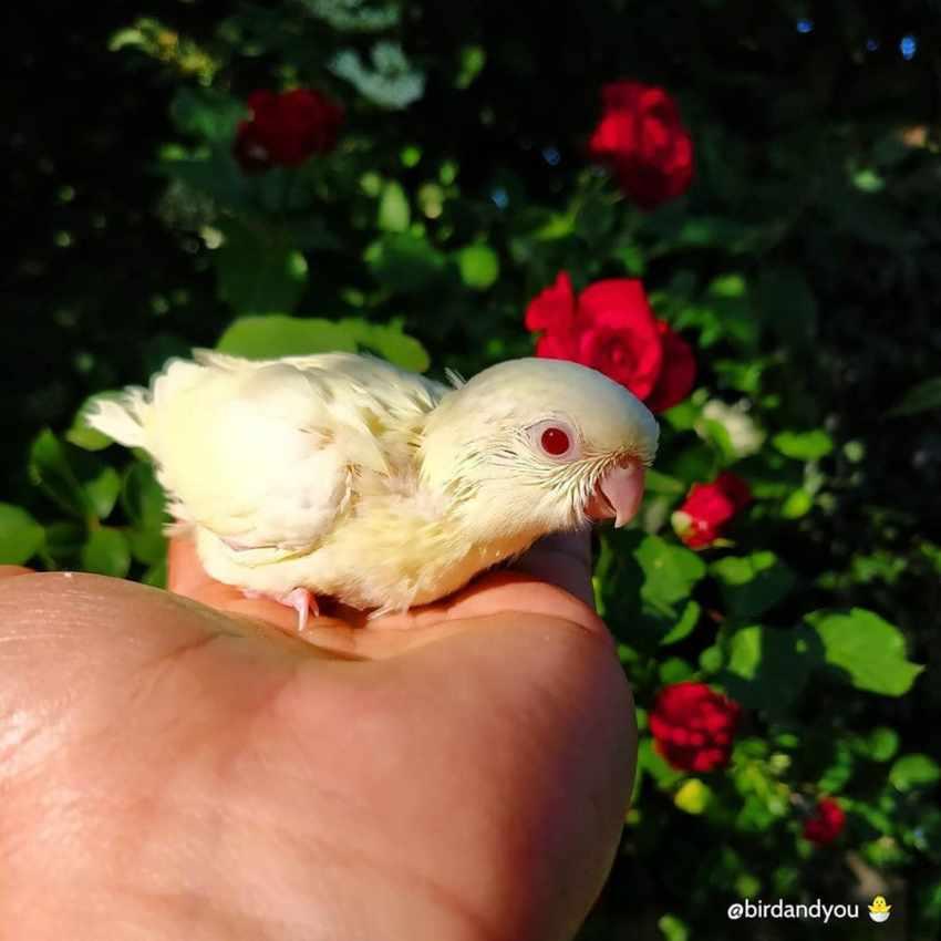 Bilan - perruche catherine crémino