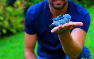 Bilan n°7: Bird and You 2020-2021