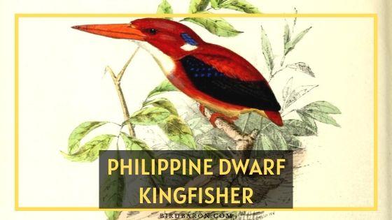 Philippine Dwarf Kingfisher Bird – Profile | Nest | Threats