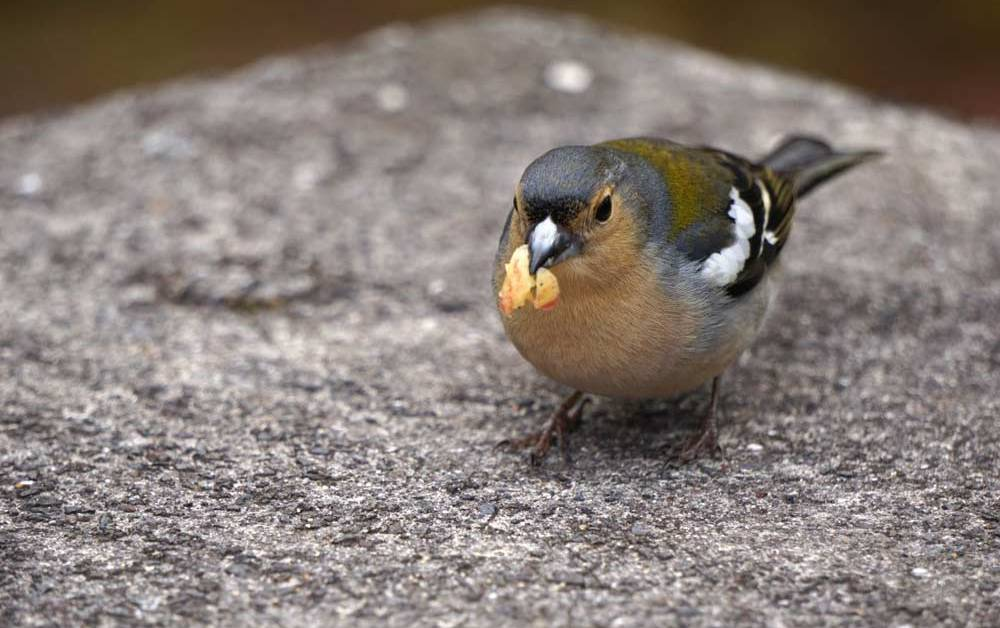 9 Handy Tips To Remember On How to Feed A Wild Bird