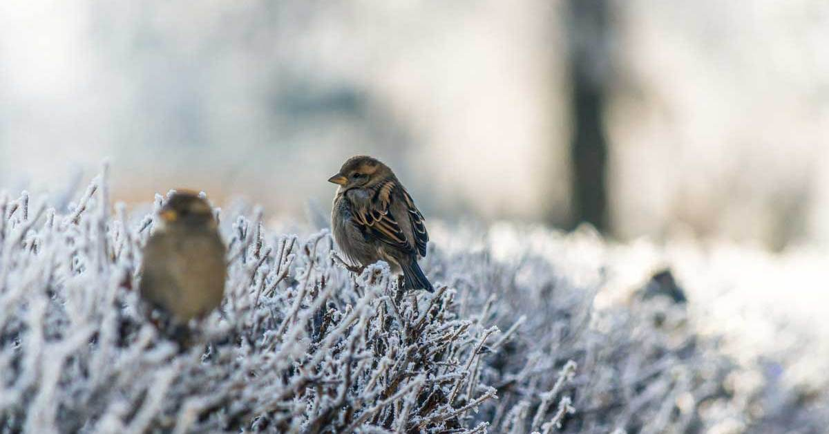 How to Help Wild Birds in Winter To Successfully Survive