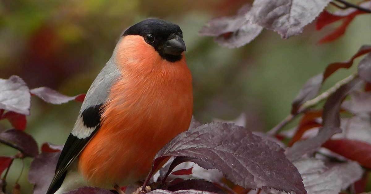 50 Interesting Bird Facts – Surprising Trivia about Birds