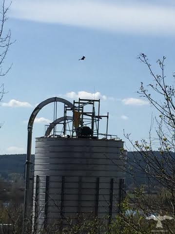 Flygande fågelskrämma på silo vid bondgård för att skrämma fåglar