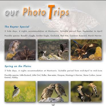 La Sabina bird photo trips
