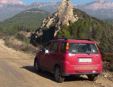 The Red Suzuki