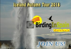 iceland-video-screen-blog