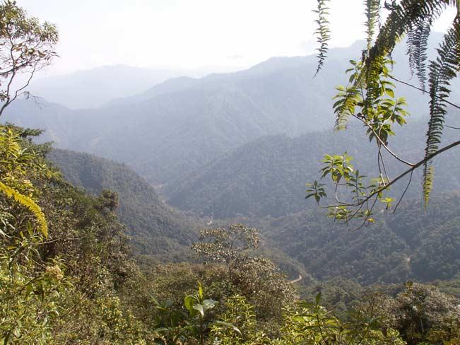 Tandayapa Valley, Ecuador