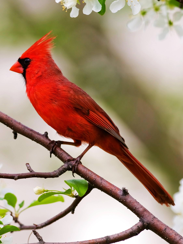 Birds Of Ohio Backyard Northern Water