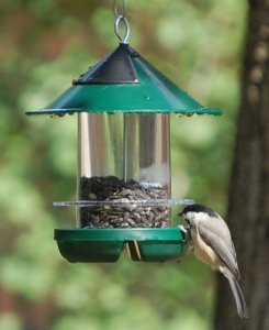 attract more goldfinches 2