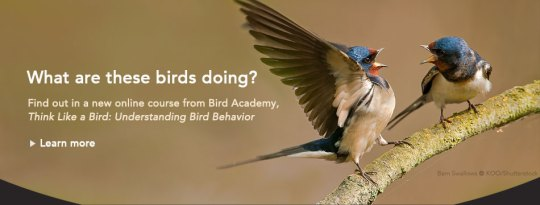 Birds     Summer 2018 Understanding Bird Behavior