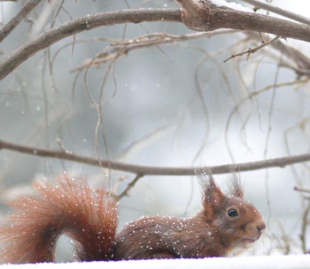 Le petit écureuil sur mon balcon