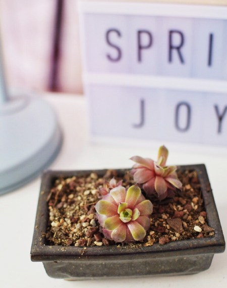 Succulentes plantes - dans mon appart