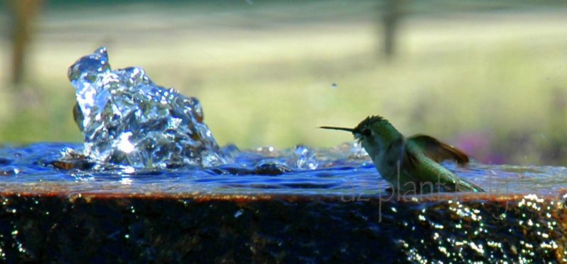 Image result for hummingbird bath