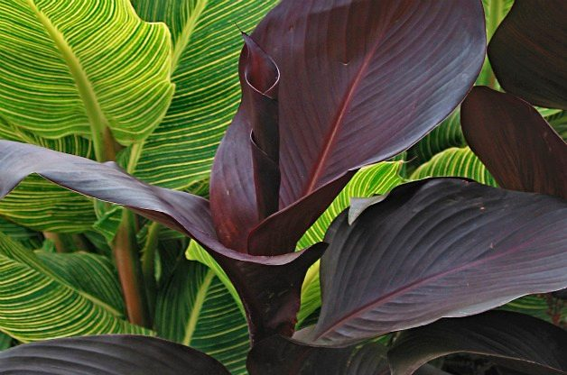 Top 10 Black Plants Gardening Birds Blooms