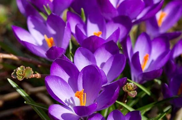 Top 10 Flowers That Attract Bees   Birds and Blooms Top 10 Flowers That Attract Bees