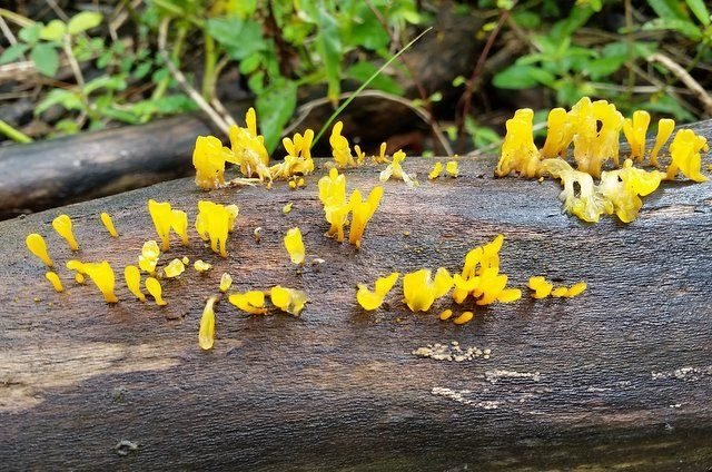 Image result for witches butter
