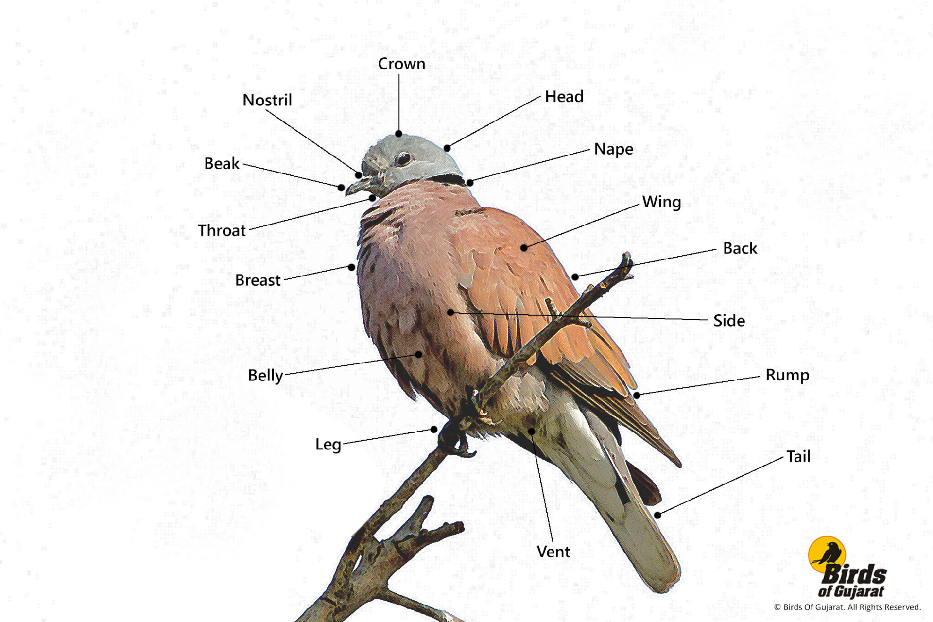Learn To Identify Birds As A Professional Birder