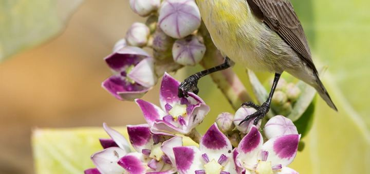Purple Sunbird perched on a branch of a tree