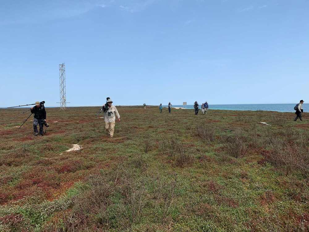 Birders on Kubar Island in action