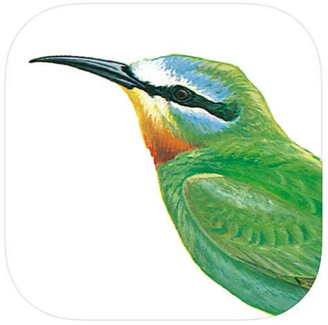 Icon of the Arabic Birds of the Middle East App which shows a portrait of a Blue-cheeked Bee-eater