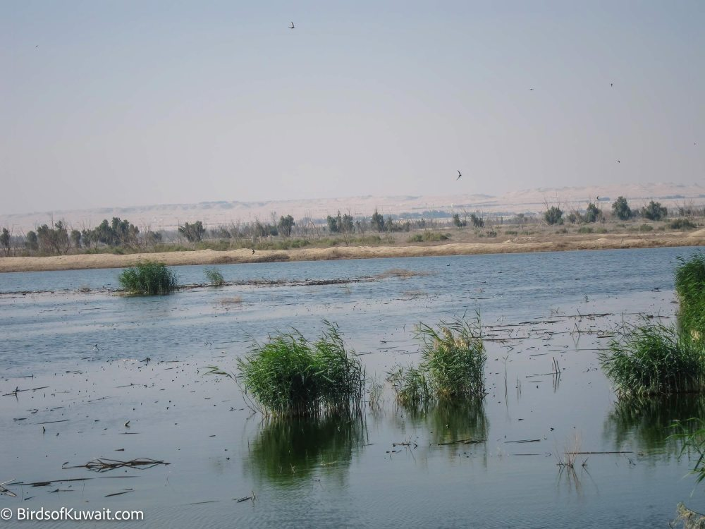Jahra Pools Reserve