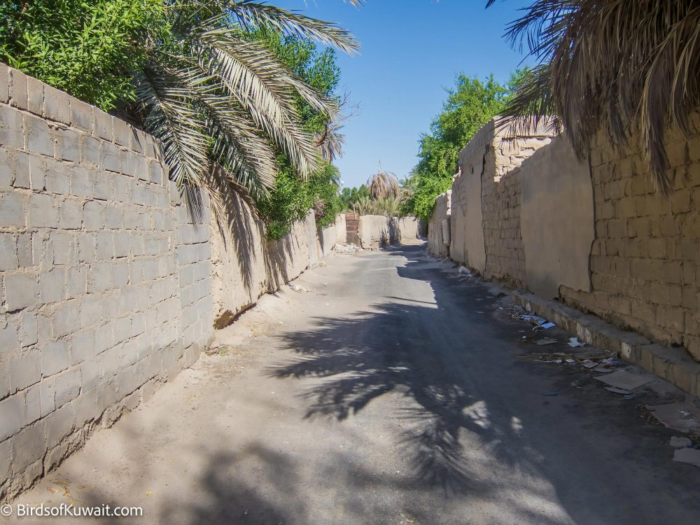 The road to the enterance of Jahra Tradional Farms