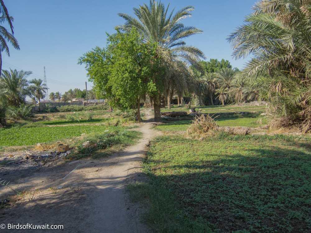 Inside Jahra Traditional Farms