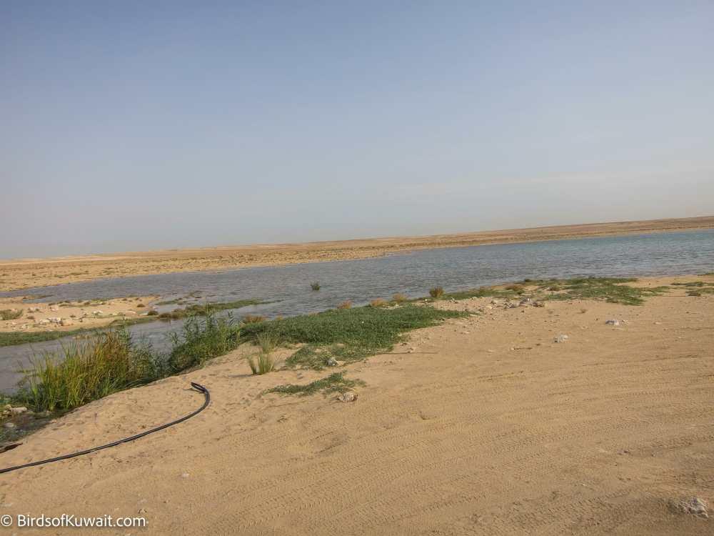 Wadi Um Erimam pool inside Sabah Al-Ahmad Natural Reserve