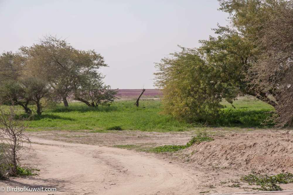 Sabah Al-Ahmad Natural Reserve