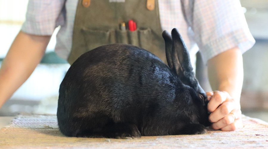 Sale Rabbits June 2018