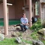 Arthur returns to the display aviary. Photo by Liz Corry