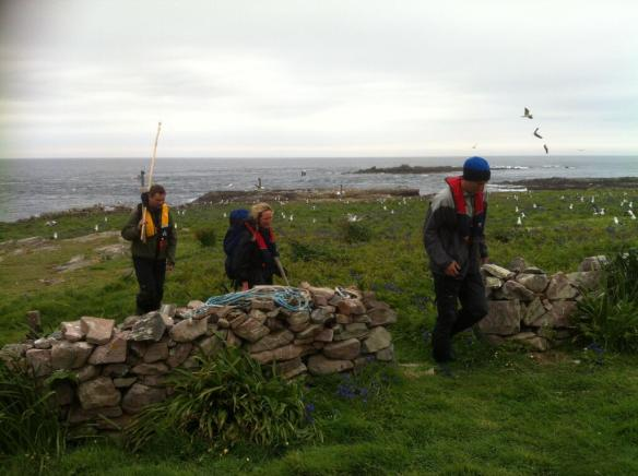 AWT gannet and shag study on Burhou, May 2013. Photo Alderney Wildlife Trust