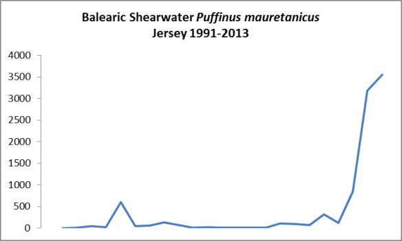 Balearic shearwater 1991-2013