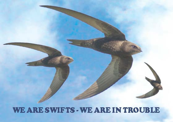 We Are Swifts - We Are In Trouble_Page_01