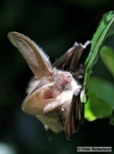 Bat 4 VR