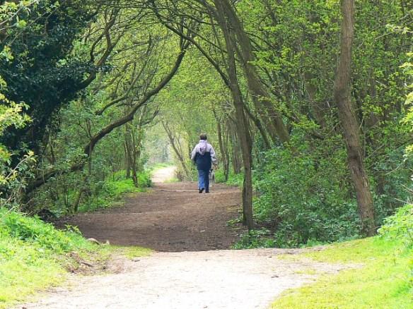footpath-on-the-eastern-bank-keynes-country-park-gloucestershire-uk