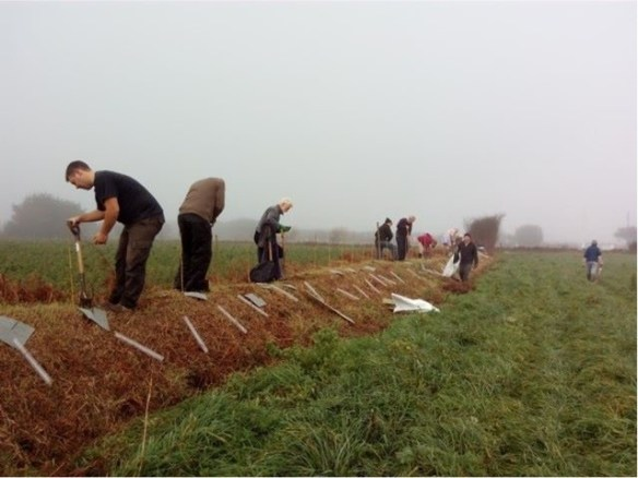 Hedge planting. Photo courtesy of Department of the Environment