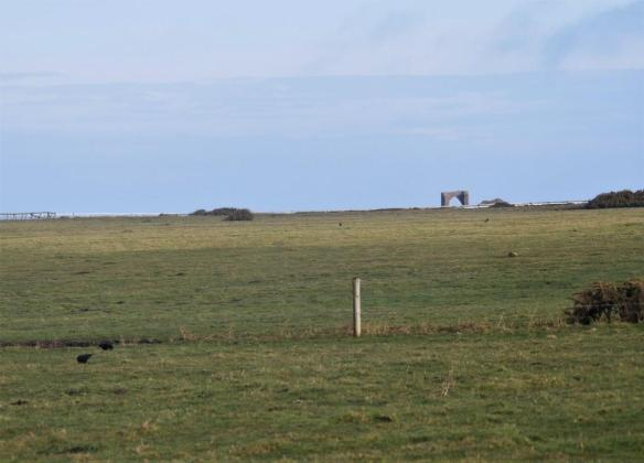 Choughs at Les Landes. February 2018 (2). Photo by Liz Corry