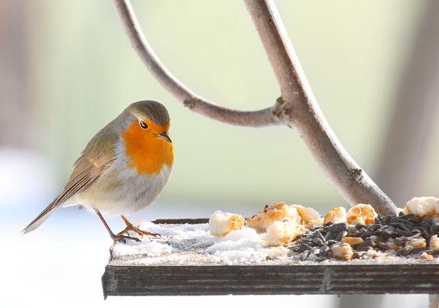 Kitchen Scraps For Birds Bird Spot