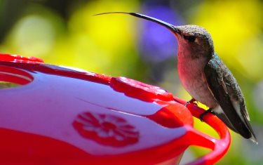 Image result for images hummingbird feeders