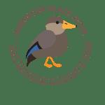 American Black Duck Picture