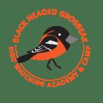 Black Headed Grosbeak Picture