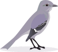 Birdwatching newsletter