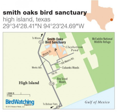 153. Smith Oaks Bird Sanctuary, High Island, Texas