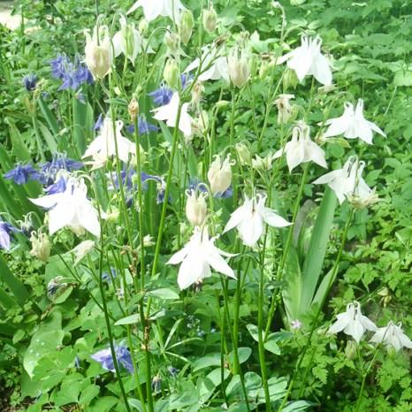 Blau-weisses Blumenbeet