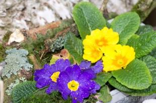 Garten im April und OBI-5909