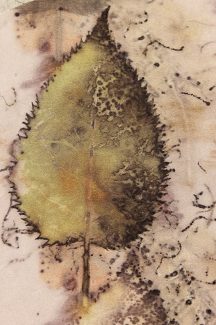 eco print on silk by Birgit Moffatt